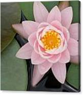 Water Lily Centered Canvas Print