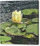 Water Lily Cometh Canvas Print
