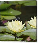 Water Lily Dragonfly 2 Canvas Print