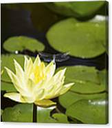 Water Lily Dragonfly Canvas Print