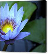 Water Lily Glow Canvas Print