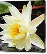 Water Lily In White Canvas Print