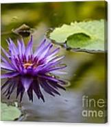 Water Lily Kissing The Water Canvas Print