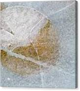 Water Lily Leaf In Ice, Boggy Lake Canvas Print