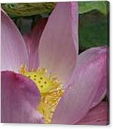 Water Lily Shower Head Canvas Print