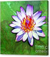Water Lily Study Canvas Print