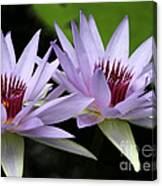 Water Lily Twins Canvas Print