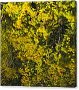 Water Reflection Abstract Autumn 1 F Canvas Print