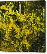 Water Reflection Abstract Autumn 1 G Canvas Print