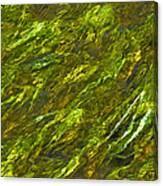 Water.4428 Canvas Print