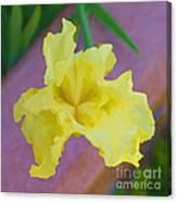 Watercolor Iris Canvas Print