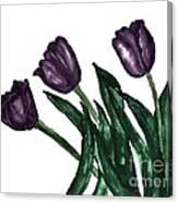 Watercolor Purple Tulips Canvas Print