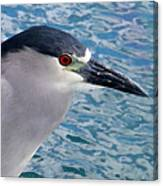 Watercolored Black-crowned Night-heron Canvas Print