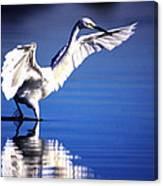 Waterdancer Canvas Print