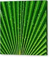 Waterdrops On Palm Leaf Canvas Print