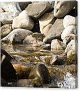 Watering Hole Canvas Print
