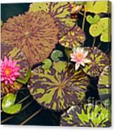 Waterlilies In A Garden Pool Canvas Print