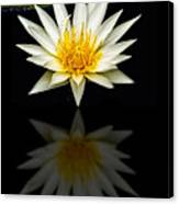 Waterlily And Reflection Canvas Print