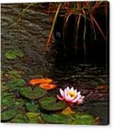Waterlily In The Rain 2 Canvas Print