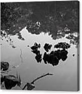 Watery Reflections Canvas Print