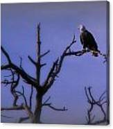 Watson Lake Bald Eagle Canvas Print