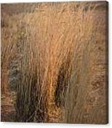 Waves Of Grass Canvas Print