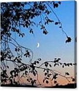 Waxing Crescent Moon Canvas Print