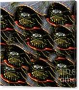 Way To Many Turtles Canvas Print