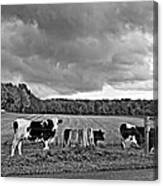 Weather Talk Monochrome Canvas Print