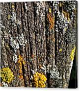Weathered Post Canvas Print