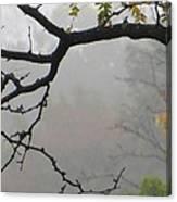 Wednesday Mist Canvas Print