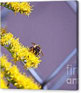 Weeds And The Bee Canvas Print
