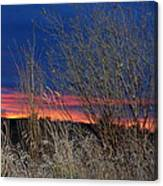 Weeds Can Be Pretty Canvas Print