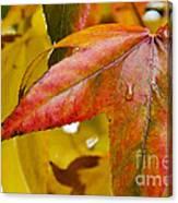 Weeping Red Leaf Canvas Print