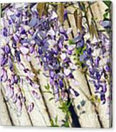 Weeping Wisteria Canvas Print