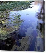 Wekiwa River Reflections Canvas Print