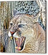Western Cougar Canvas Print
