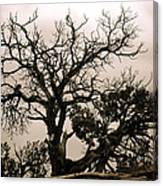 Western Winter Tree Canvas Print