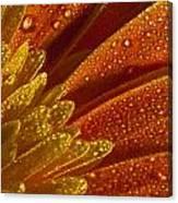 Wet Blumen Canvas Print