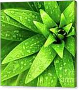 Wet Foliage Canvas Print