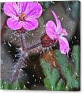 Wet Geranium  Canvas Print