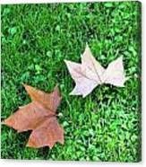 Wet Leaves On Grass Canvas Print