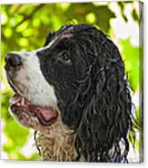 Wet Puppy 2 Canvas Print