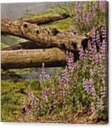 Wetland Beauty Canvas Print