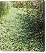 Wetland Shadows Canvas Print
