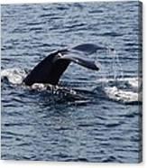 Whale Dive Canvas Print