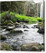 Whangarei Falls In New Zealand Canvas Print