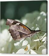 What A Schnoz On That American Snout Butterfly Canvas Print
