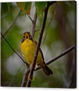 What Warblers Do Canvas Print