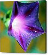 what's the story Morning Glory Canvas Print